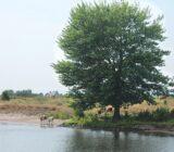 Rivier de Waal tussen Heusden en Gorinchem