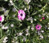 Bloemen Keukenhof