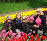 guests tulips ()