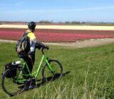 Cyclists tulip field