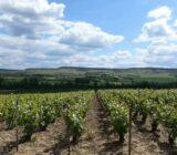 wijngaarden tussen Chateau Thierry en Epernay