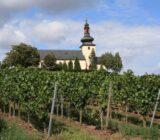Nierstein_wijngaarden