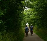 Fietsers Texel heg bomen