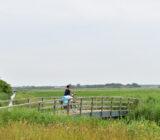 Texel brug natuur