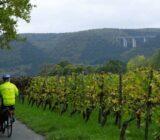 fietsen langs wijngaarden