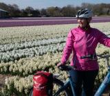 fietster naast tulpenveld