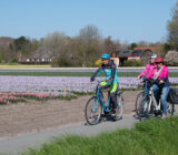 fietsen langs tulpenveld