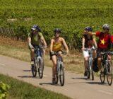 Fietstocht langs wijnvelden