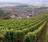 Wijngaard Bourgondie