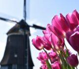 Volendam Kathammer molen